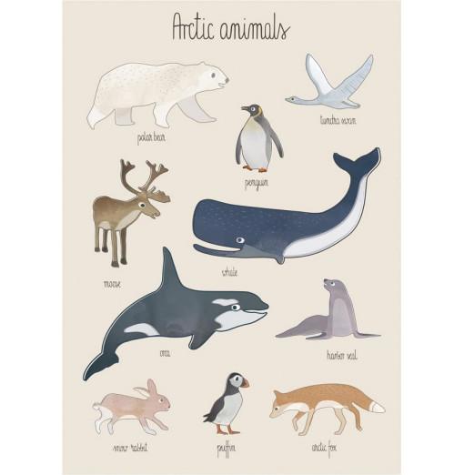 Póster Arctic animals - Sebra